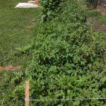 garden looking green