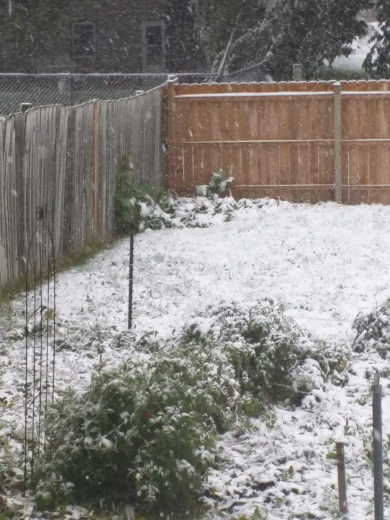 Our garden once the snow hit in 2018