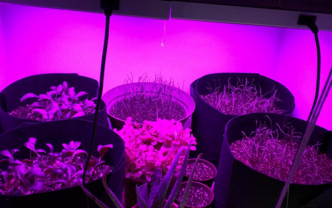 Closet Grow Update