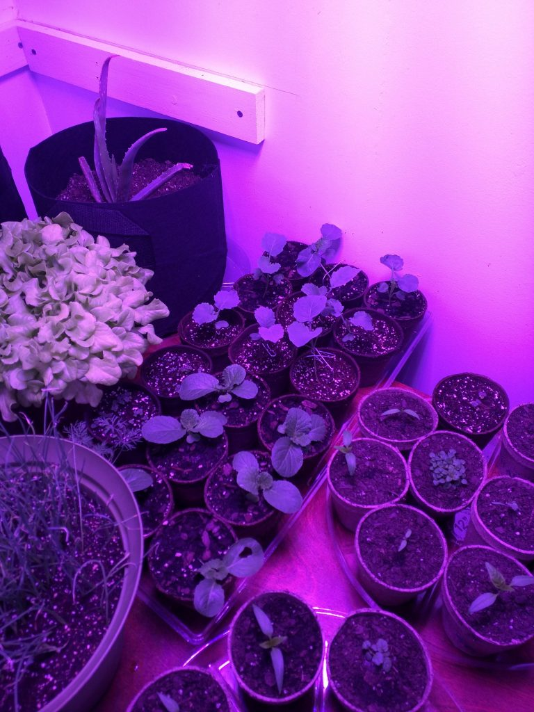 A look of all the grow room
